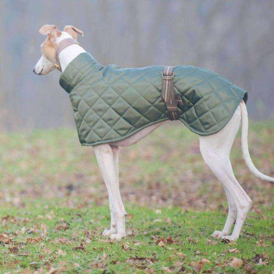 Dog Coat Pattern | Hunde, Hundekleidung und Hundebett
