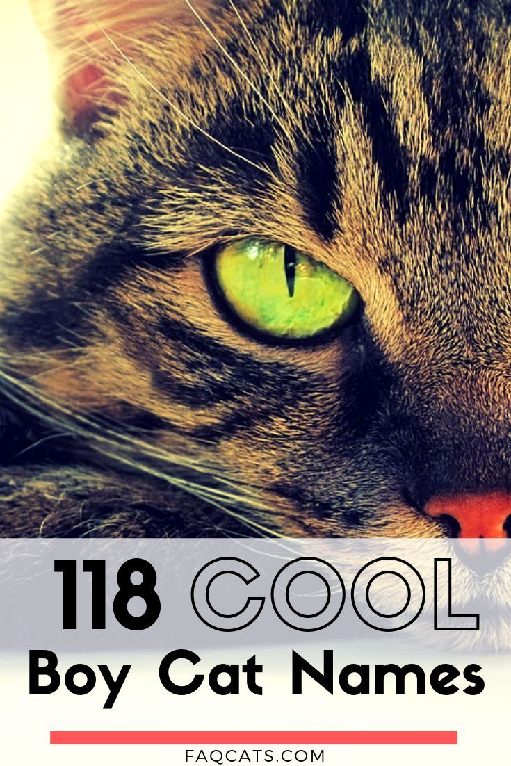 118 Male Tabby Cat Names (With images) Tabby cat names