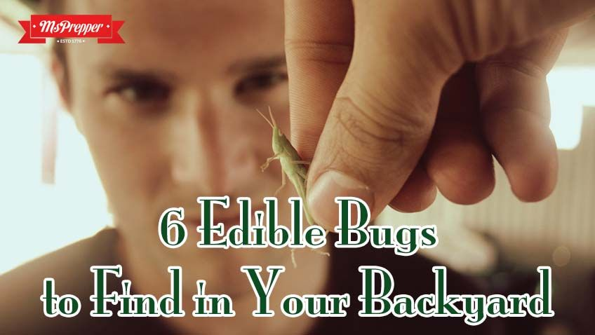 6 Edible Bugs to Find In Your Backyard