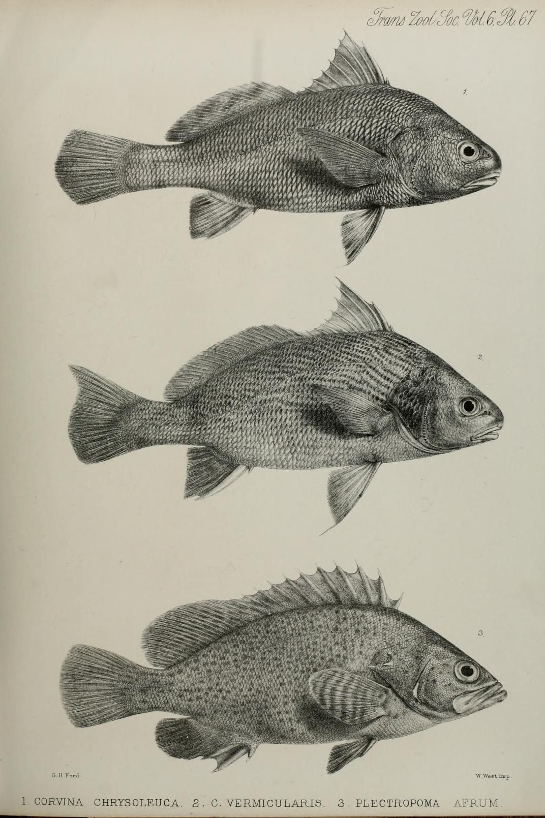 Transactions of the Zoological Society of London | Fish | Pinterest ...