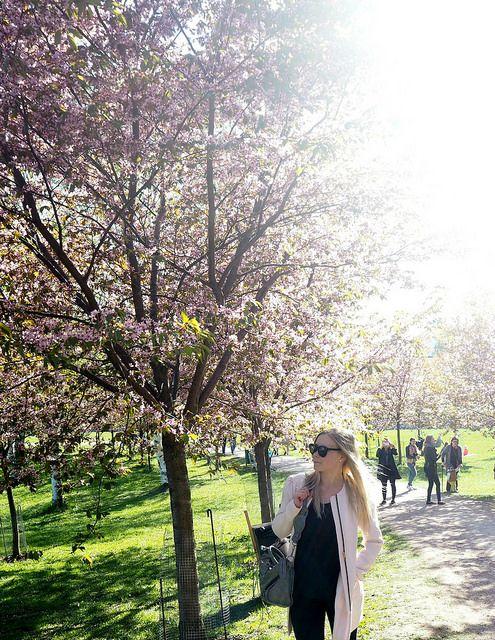 A'la Annn: Cherry Blossom Girl  Cherry blossom in Helsinki, Finland.  Roihuvuori, Cherry park.   Light pink pastel coat.