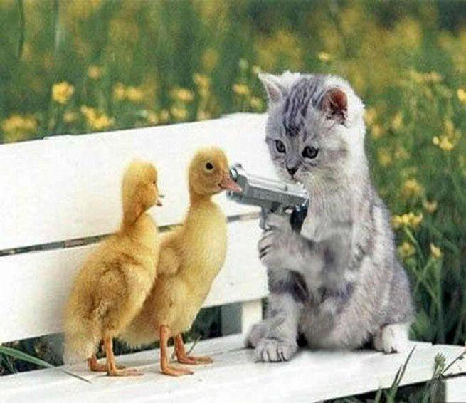 Funny Animals With Guns Daily Bhaskar Com Funny