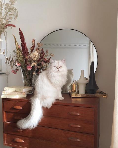 Photo of Parisienne: LO QUE NO SABES – Parisienne: LO QUE NO SABES – #allergictocats #c …