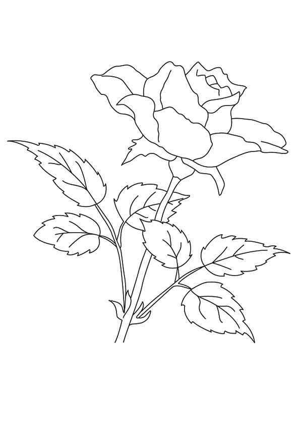 Printable Rose Flower Coloring Page