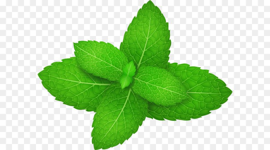 Mentha Spicata Peppermint Herb Leaf Vector Green Mint Leaves Png Is About Is About Herb Plant Leaf Herbalism Peppermin Leaves Mint Leaves Peppermint Herb