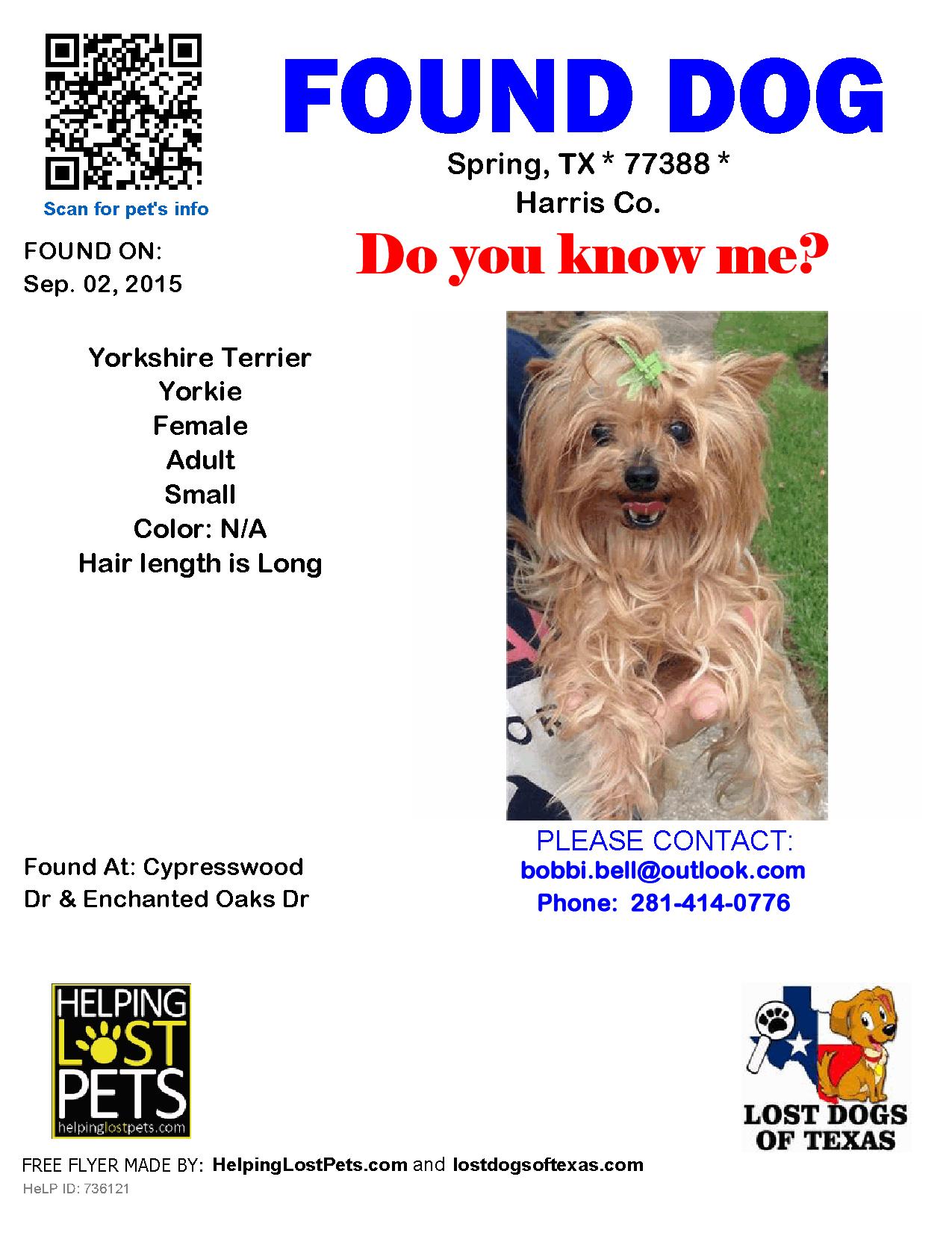 Found Dog Yorkshire Terrier Yorkie Spring Tx United States