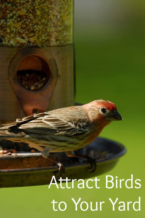 How To Attract Birds To Your Yard (video tutorial) | How ...