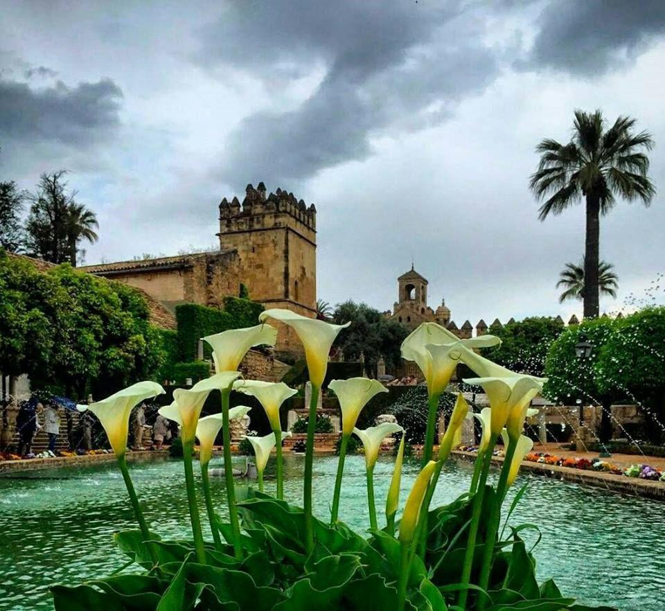 Cordoue, Andalucia, Spain.