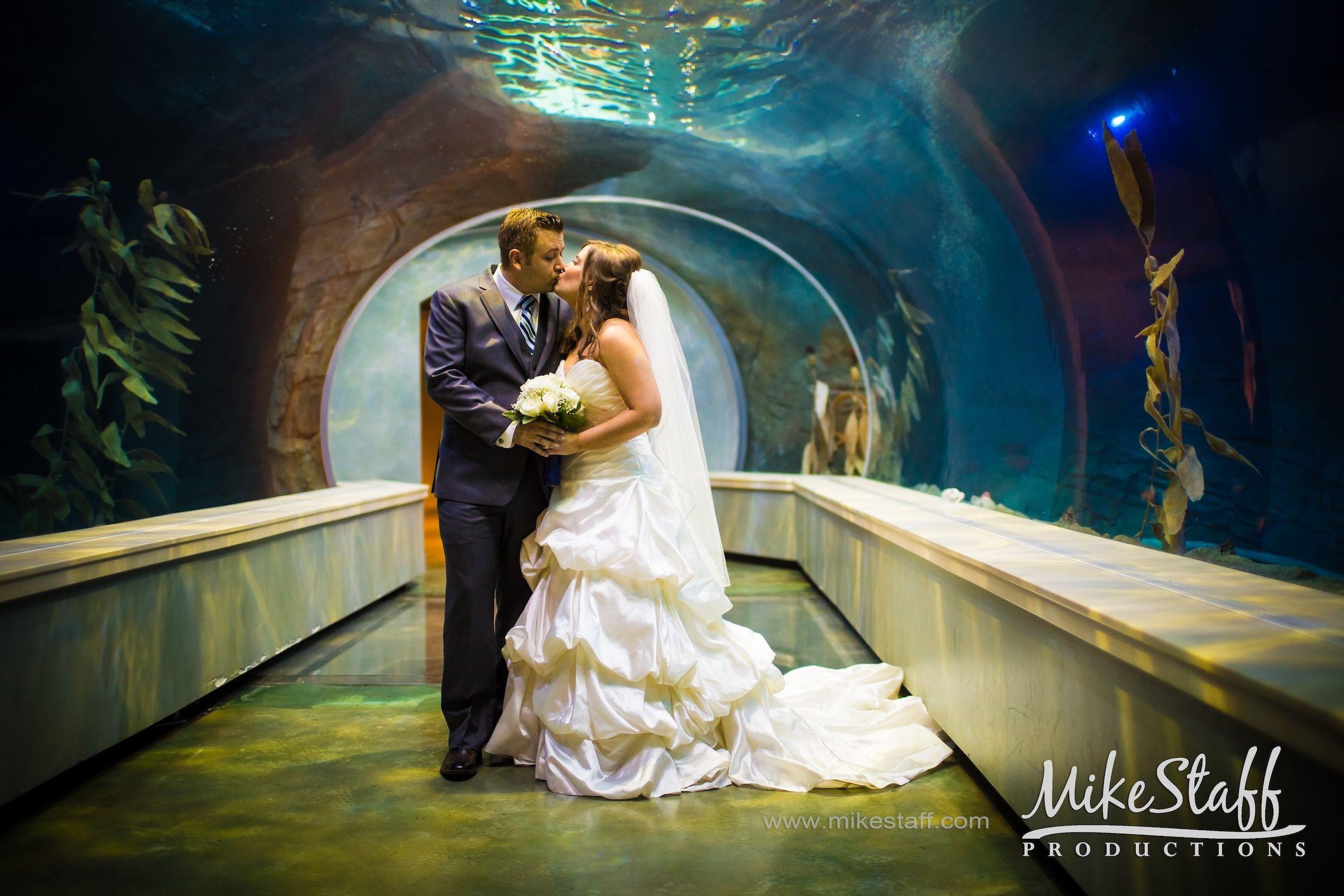Bride And Groom Kissing In Aquarium Tunnel Michiganwedding Chicagowedding Mikestaffproductions Wedding Wedding Videography Michigan Wedding Chicago Wedding