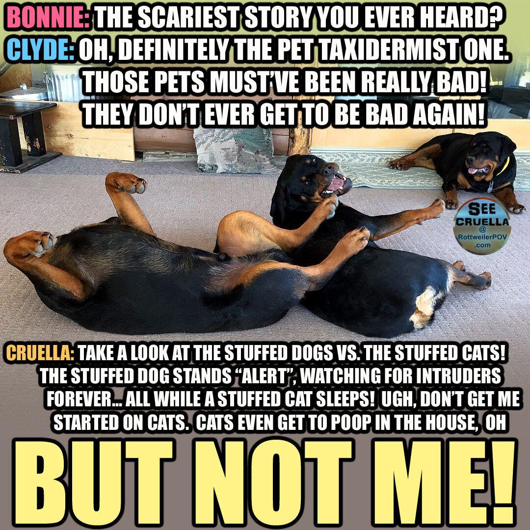 Rottweilers Meme Monday Rottweiler Rottweiler Love Memes