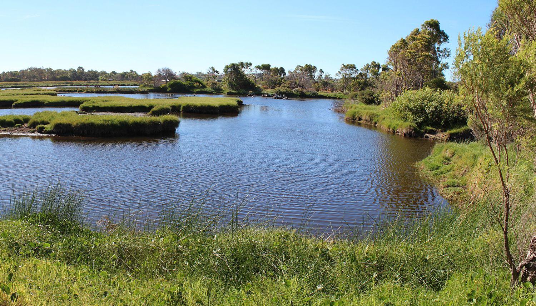 Pacific Southwest Wetland Restoration Blend Seeding Lawn Wetland Grass Seed