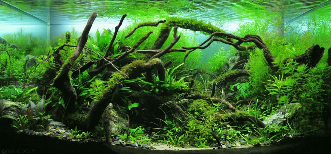 The Top 10 Most Beautiful Freshwater Aquascapes Of 2012 Fpsbutest Planted Aquarium Aquascape Nature Aquarium