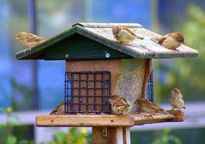 صور عصافير الزينة In 2021 Bird House Bird Outdoor Decor
