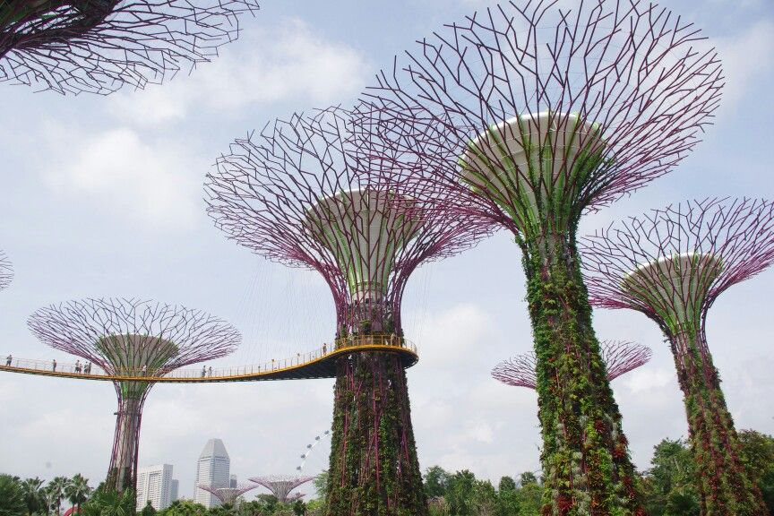 The tree in Garden by the Bay, Singapore