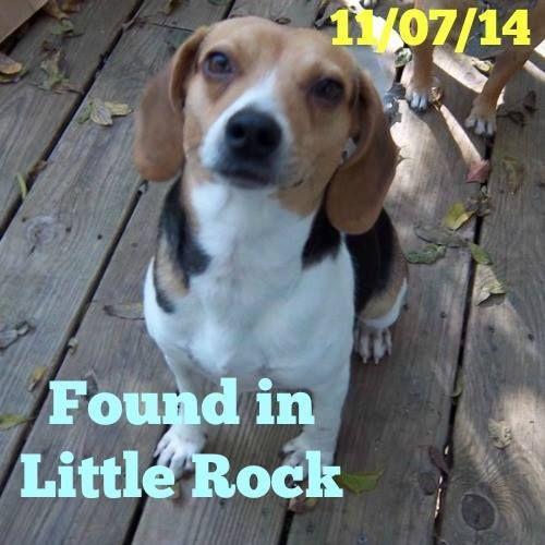 Melissa Jenks Lost And Found Beagles November 12 2014 Found Un