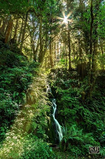 It has waterfalls of all sizes lots of moss ferns and big trees and once in awhile a beam of sun finds its way through the thick canopy. & The Quinault Rainforest is an amazing place. It has waterfalls of ...