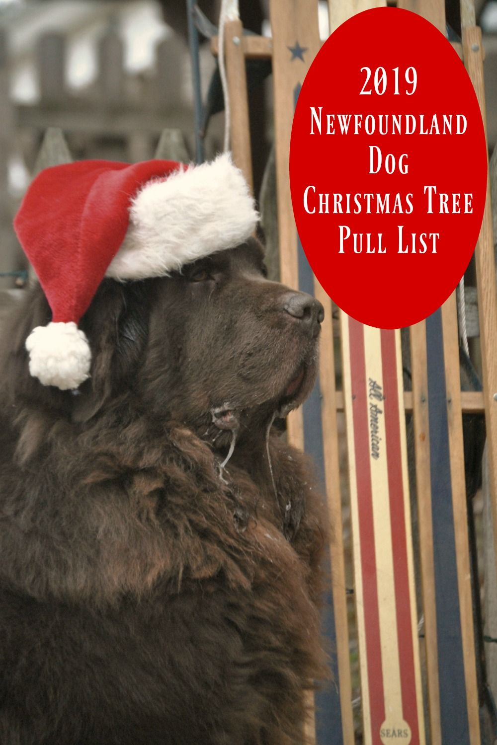 2019 Newfoundland Dog Christmas Tree Pull List Christmas