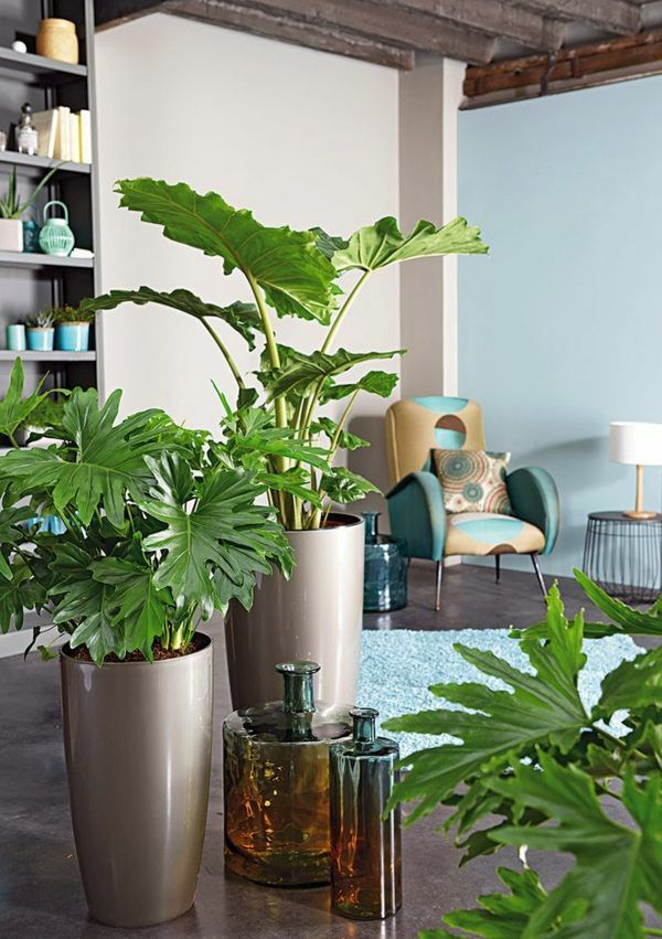 Feng Shui plants for harmony and positive energy in the living room ...