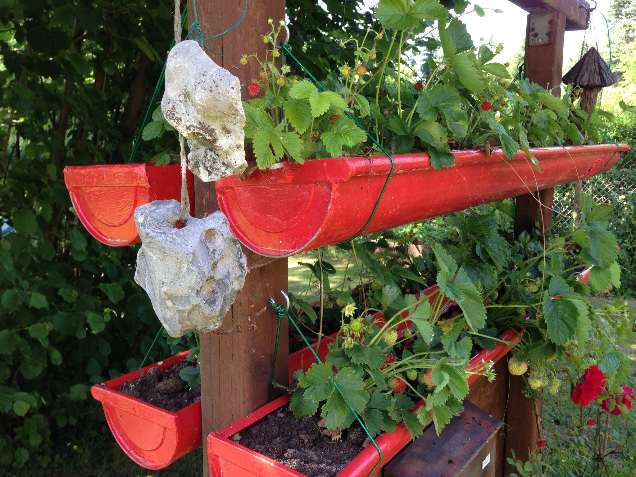 Rain gutter for growing strawberries #raingutterplanters #planters