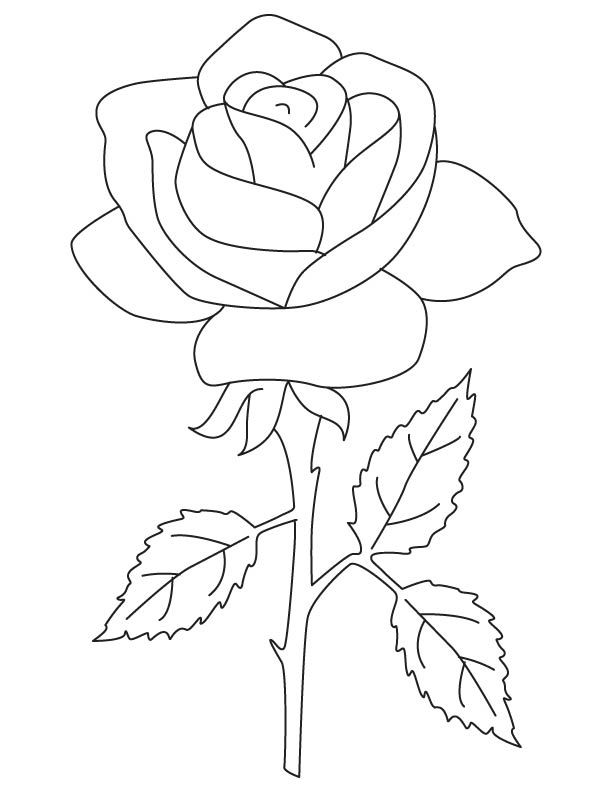 Rose Rose Rose Coloring Page Rose Coloring Pages Flower Coloring Pages Flower Drawing