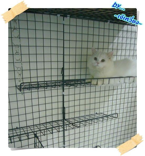 Pantip Com J9670900 Ooooooooooมาแล วจ า มาแล วจ ากรงคอนโดใหญ ย กษ ทำเองก บม อมาแล วจ าoooooooooo แมว แมว