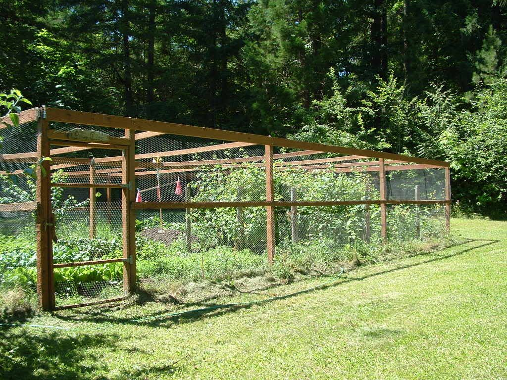 Vegetable garden deer fence ideas - Vegetable Garden Fence Home Orchard Society Forums View Topic Viron S Tour