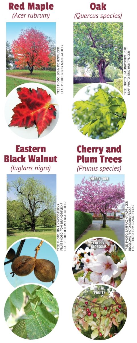 Pin by Ingrids Naturals on Toxic Plants – Garden Plants Toxic to Dogs
