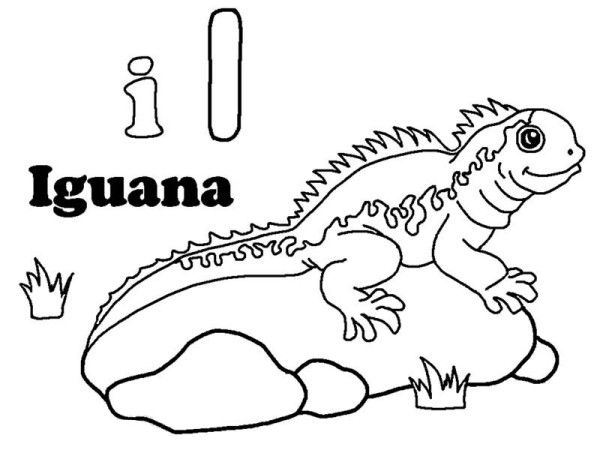 Iguana Iguana Sunbathing On A Rock Coloring Page Jpg Abc