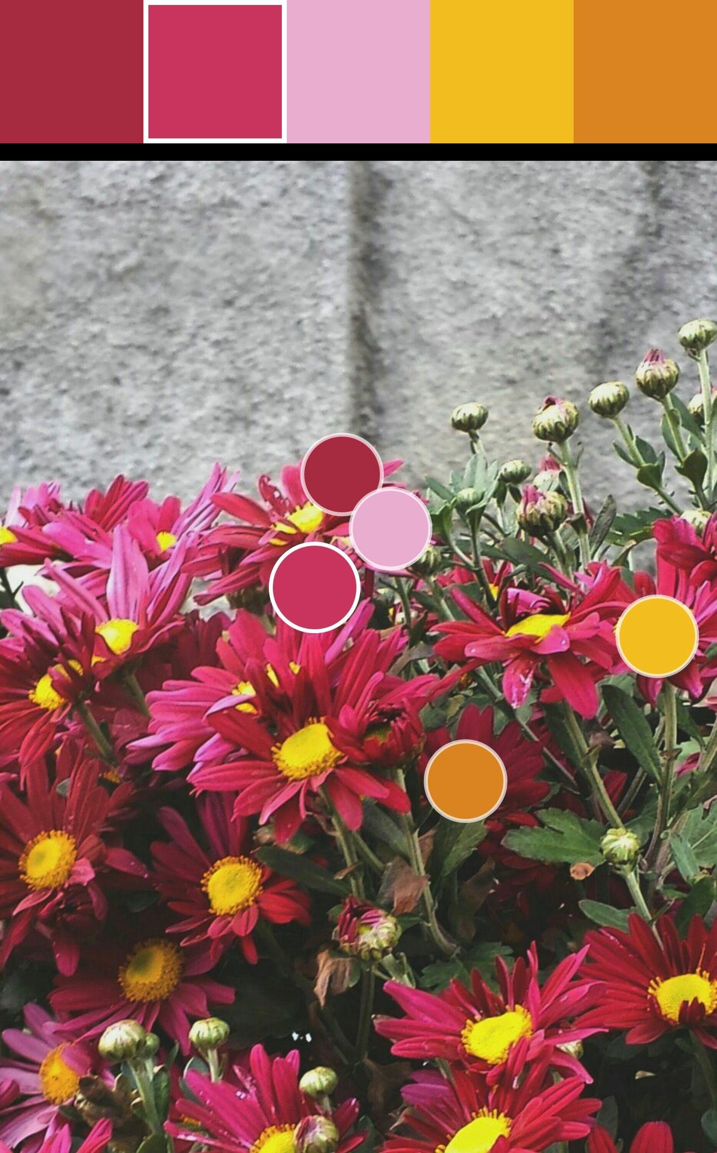 Rosado fucsia y rosado claro(4):C9345C/EAADD0 Paleta y puntos de color