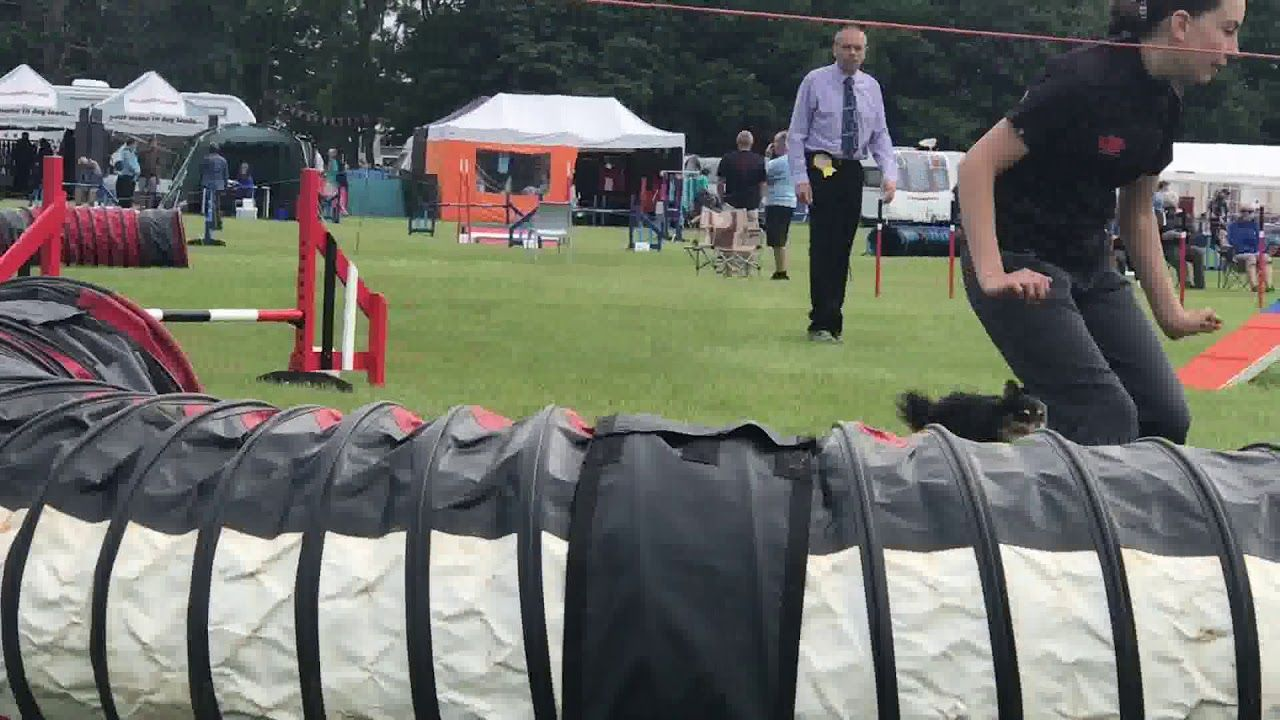 Dog agility godmanchester dog training club show june 2018