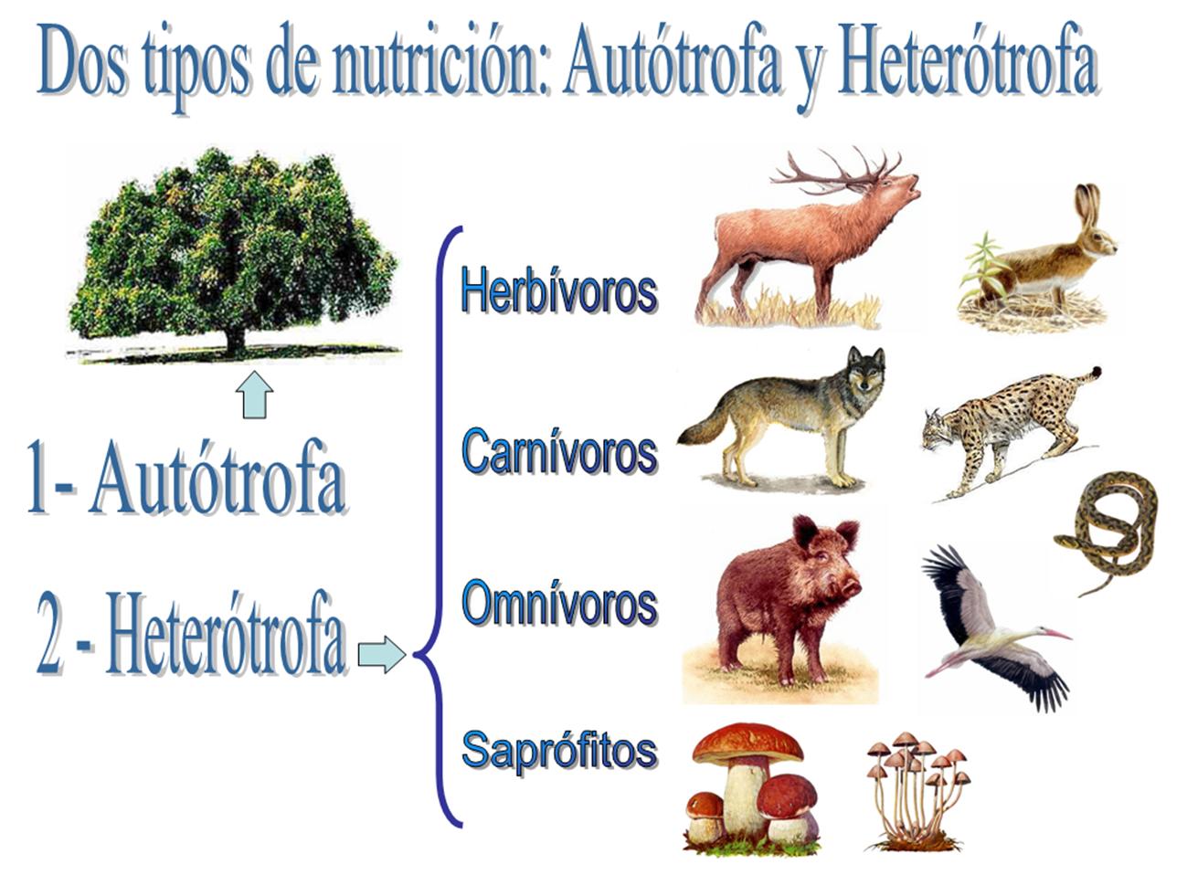 AUTOTROFO Y HETEROTROFO PDF DOWNLOAD