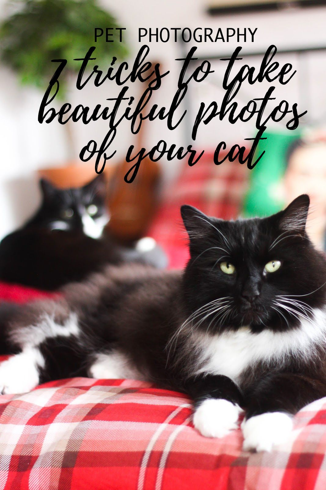 Pet Photography 7 Tricks To Take Beautiful Pictures Of Your Cat Cityscape Bliss Naughty Felines Cat Photography Black And W Cats Pets Animal Photography