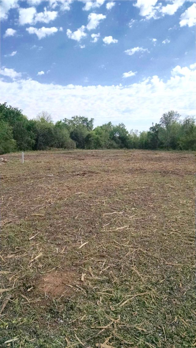 Forestry Mulching Under Brush Clearing Brush Removal