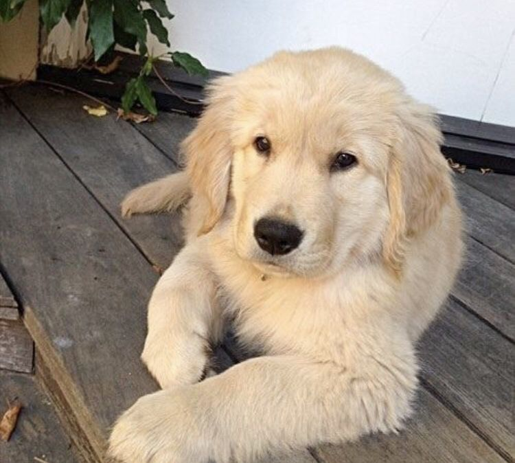 Pin On Unique Dog Training