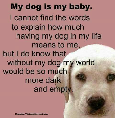 I Love My Dog Quotes New My Dog Is My Baby  Dog Quotations Group  Pinterest  Dog