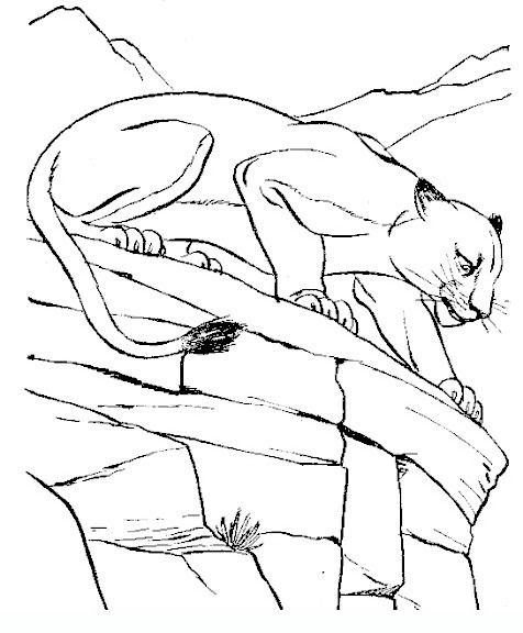 Panther Adult Coloring Pages