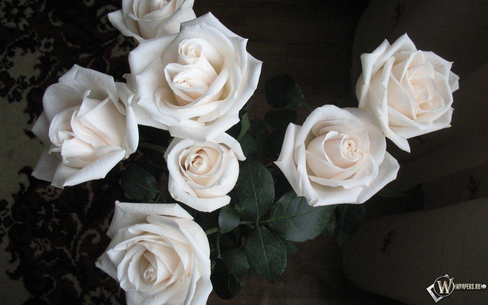 Скачать бесплатно фото розы белые