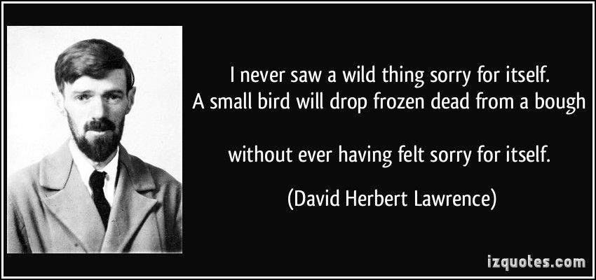 I Never Saw A Wild Thing Sorry For Itself A Small Bird Will Drop
