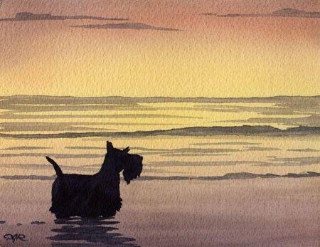 Scottish Terrier at the Beach 11 x 14 Dog Art Print by Artist DJR
