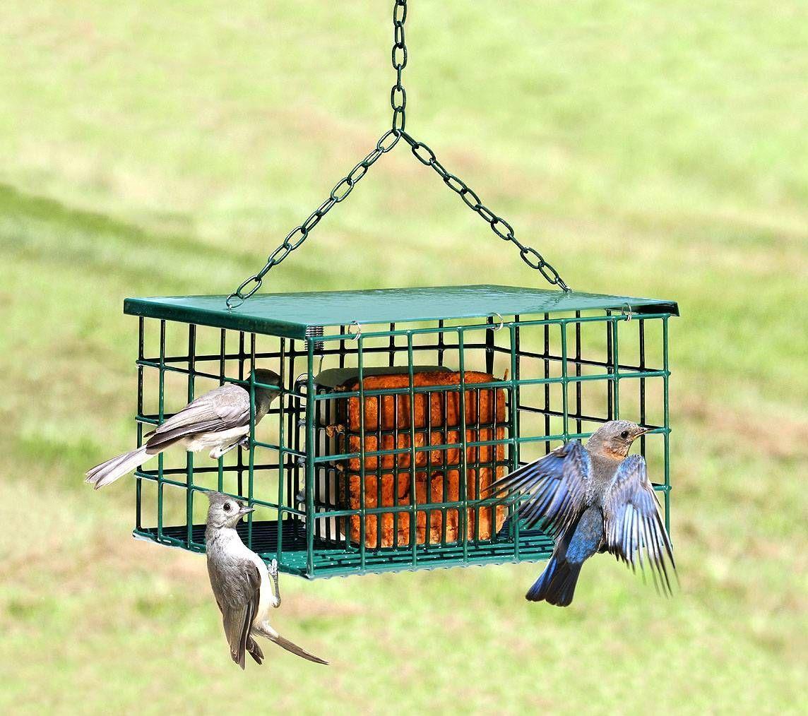 Squirrel Resistant Suet Feeder Suet feeder, Suet bird