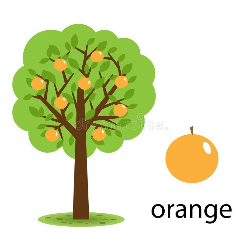 Orange Tree Illustration Of A Cartoon Orange Tree Isolated On White Background Sponsored Orange Isolated Tree Doodle Orange Tree Fruit Illustration