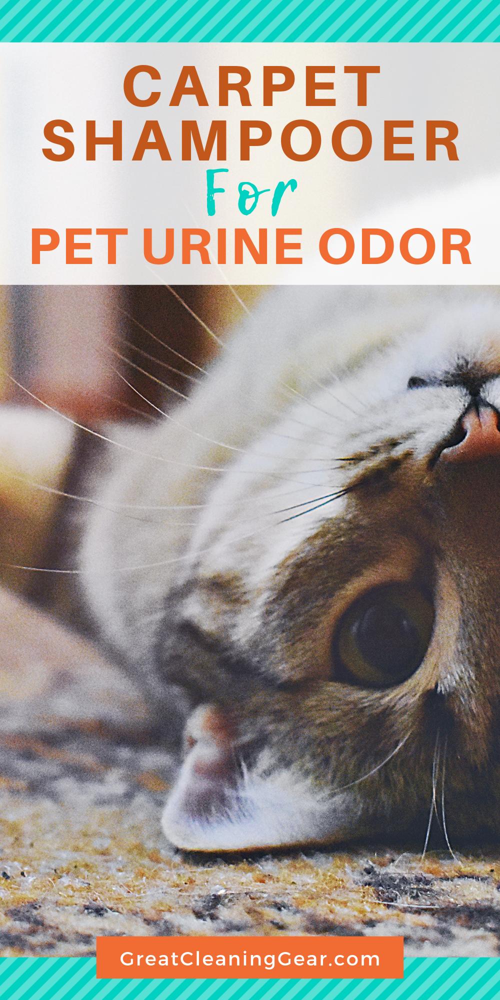 Best Carpet Shampooer for Pet Urine Pet urine, Pet