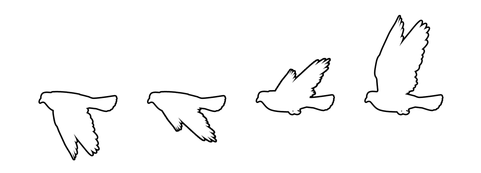 This Image Sequence Shows A Bird Flying Forward We Can See Different Wing Movements In Sequential Visual Imag How To Draw Shadow Movement Drawing Romantic Art