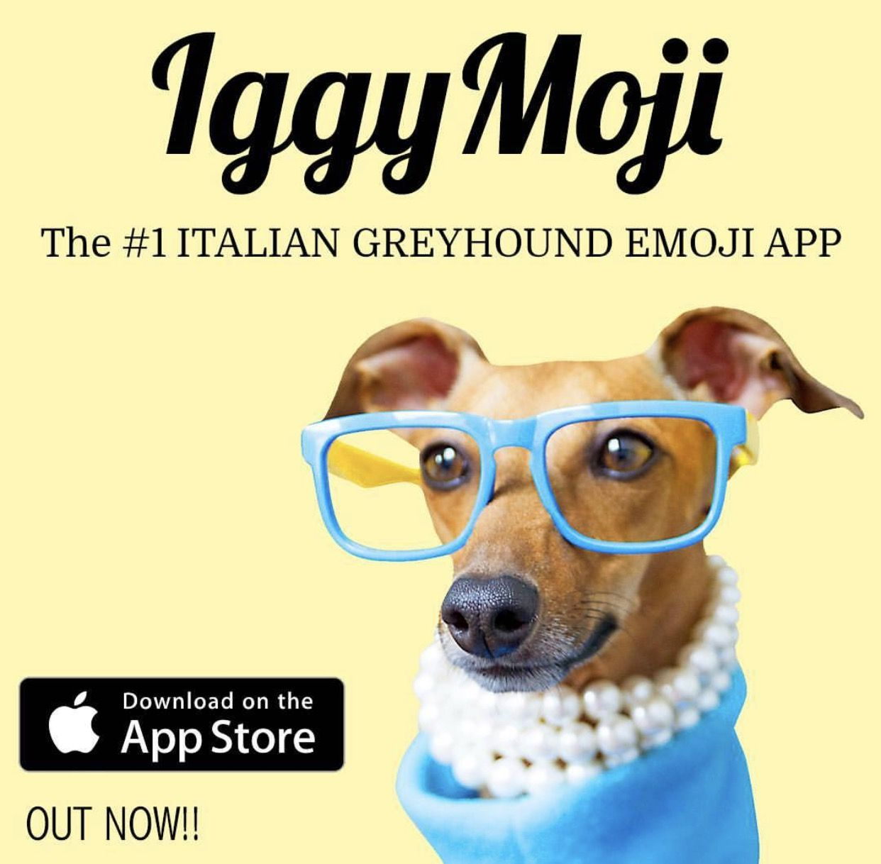 Introducing Iggymoji The New Emoji App From Iggy Joey Anguspost Iggy Italian Greyhound Whippet