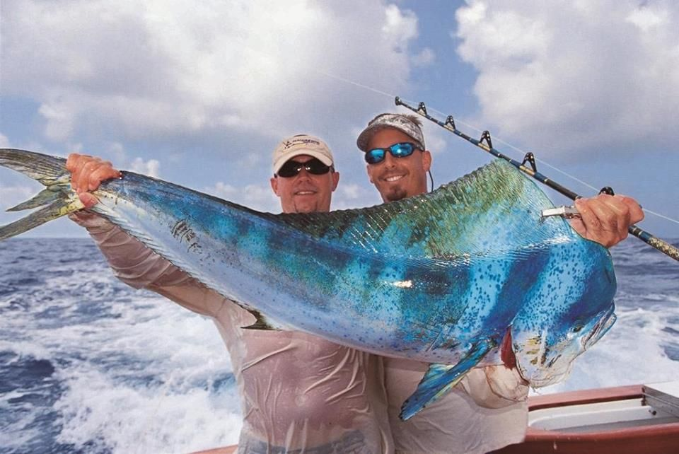 Beautiful Blue Dorado Salt Water Fishing Sea Fishing Deep Sea Fishing