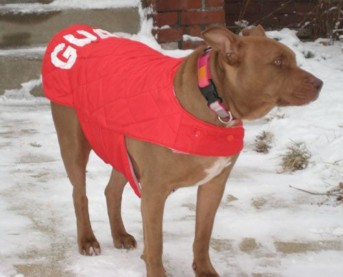tutorial - make a dog coat out of recycled jacket. Great idea for my big guys!!!