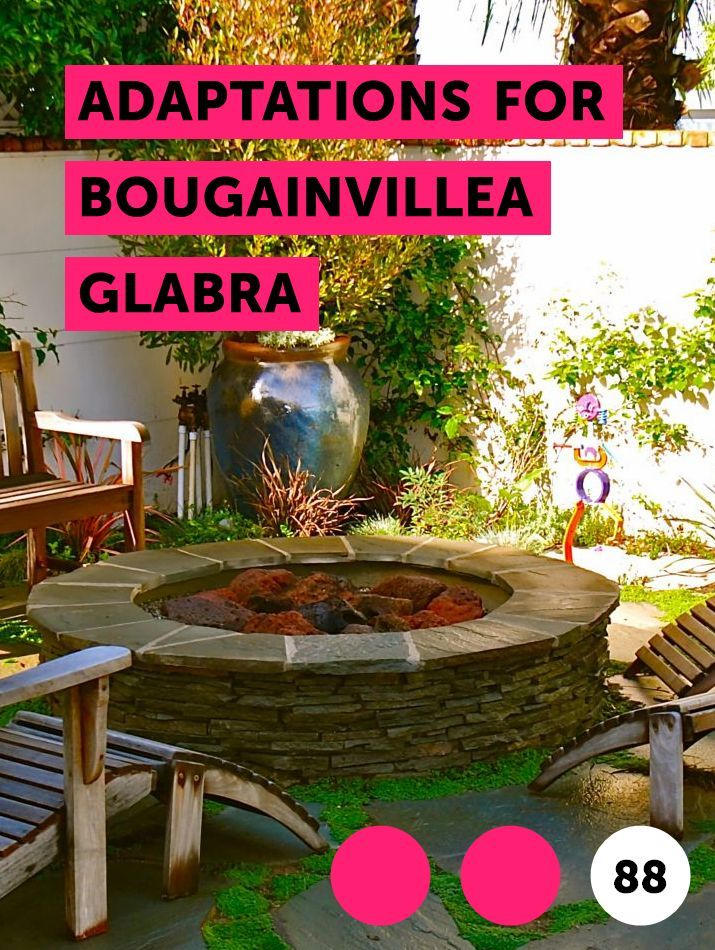 Adaptations for Bougainvillea Glabra Garden soil, Plants