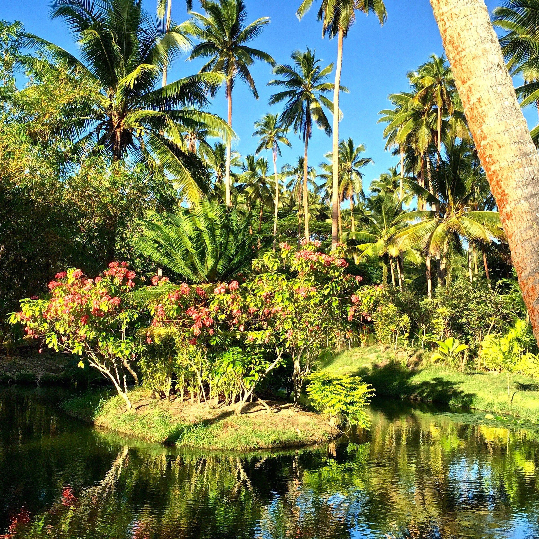 40 best Jean Michel Cousteau Fiji Resort Reviews