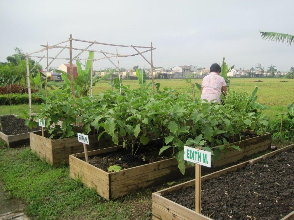 b8c6fe847776996309ac030344b8f1e8 - Bio Intensive Gardening In The Philippines