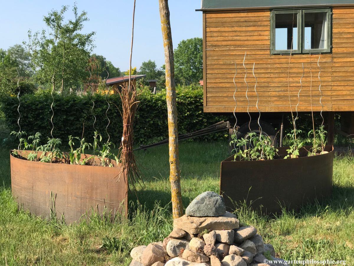 Von Einer Die Sate Tomaten Zu Ernten Gartenphilosophie Org Garten Pflanzen Pflanzen Garten